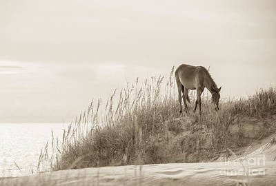 Wild Horse Photograph - Wild Horse On The Outer Banks by Diane Diederich