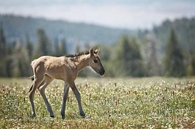 Horse Photograph - Wild Horses-animals-image-17 by Wildlife Fine Art
