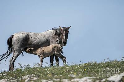 Mountain Photograph - Wild Horses-animals-image-19 by Wildlife Fine Art