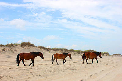 Atlantic Ocean Mixed Media - Wild Horses Of Corolla - Outer Banks Obx by Design Turnpike