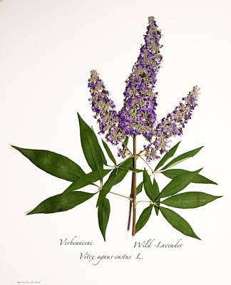 Wild-lavender 1 Print by Roberta Jean Smith