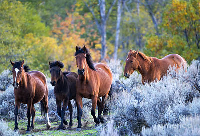Wild Horse Photograph - Wild Mustang Autumn by Mike Dawson