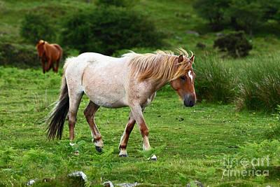 Bodmin Photograph - Wild Ponies On Bodmin Moor by James Brunker