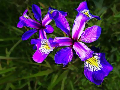 Manipulation Photograph - Wild Purple Iris by Bill Caldwell -        ABeautifulSky Photography