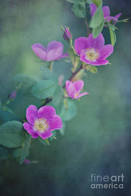 Uncultivated Photograph - Wild Roses by Priska Wettstein