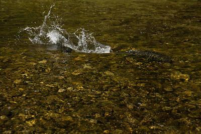 Wild Salmon River Run Print by Georgia Mizuleva