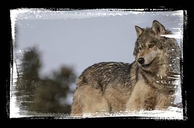 Wolf Photograph - Wild Side by Wildlife Fine Art