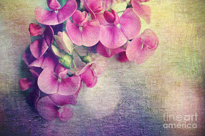 Wild Sweet Peas Print by Sylvia Cook
