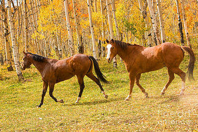Corporate Art Photograph - Wild Trotting Autumn Horses by James BO  Insogna