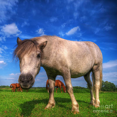 Wild Young Horse On The Field Print by Michal Bednarek