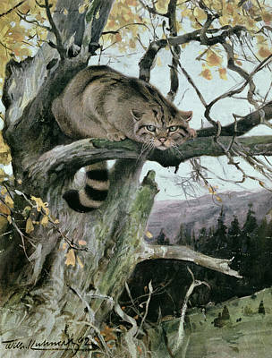 Wildcat In A Tree Print by Wilhelm Kuhnert