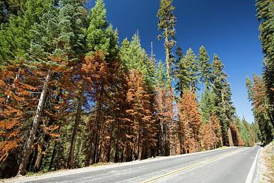 Wildfire Damage In Yosemite National Park Print by Ashley Cooper