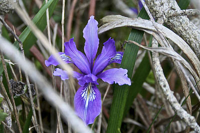 Flowers Photograph - Wildflower At Bodega Bay by SC Heffner