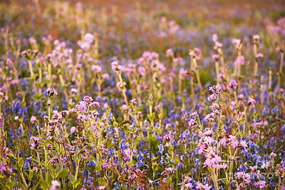 Wildflower Dusk Print by Anne Gilbert
