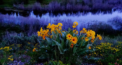 Wildflower Reflection Print by Dan Sproul