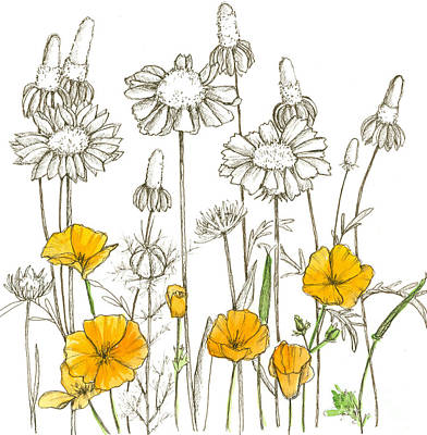 Sepia Ink Drawing - Wildflower Sketches by Cathie Richardson