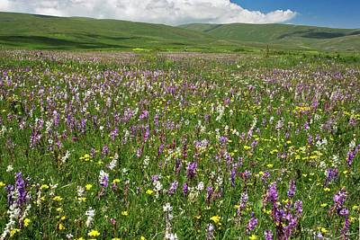 Angiosperms Photograph - Wildflowers In Grassland by Bob Gibbons