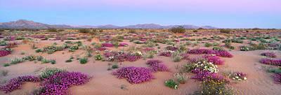 Exuberance Photograph - Wildflowers Of Gran Desierto Sand Dunes by Thomas Wiewandt