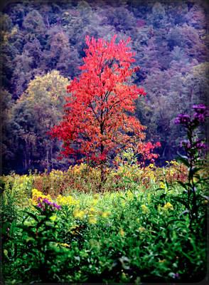 Wildwood Photograph - Wildwood Flowers by Karen Wiles