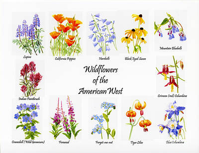 Sitka Painting - Wilflowers Of The American West by Sharon Freeman