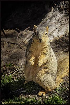 Will You Help A Squirrel In Need Print by LeeAnn McLaneGoetz McLaneGoetzStudioLLCcom