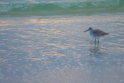 Bowmans Beach Photograph - Willet At Dusk by Steven Ainsworth