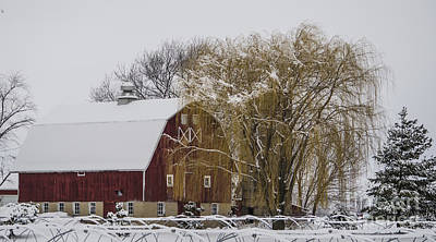 Wintry Photograph - Willow And Barn After Nemo by Deborah Smolinske