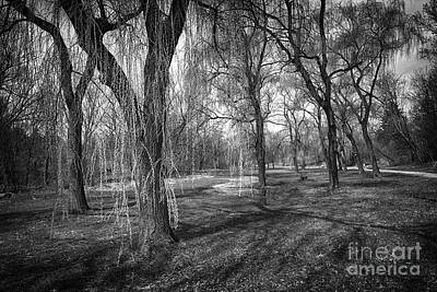 Willow Photograph - Willows In Spring Park by Elena Elisseeva