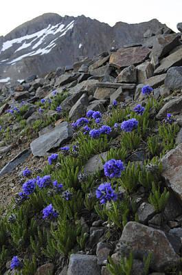 Landscape Photograph - Wilson Peak Wildflowers by Aaron Spong