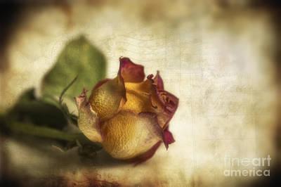 Organic Digital Art - Wilted Rose by Veikko Suikkanen