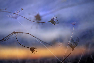 Abstracts Photograph - Wind Dance by Guido Montanes Castillo