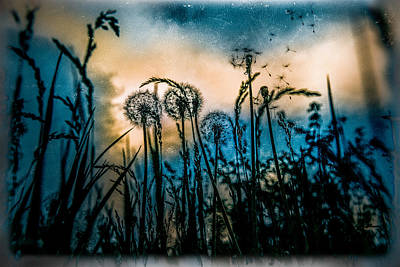 Wind Original by Mihai Ilie