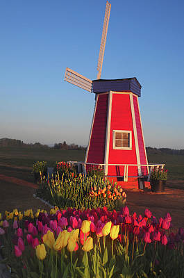 Wind Mill At The Tulip Festival Print by Michel Hersen