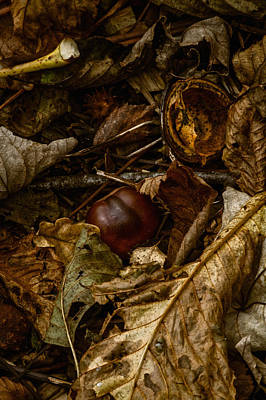 Forest Floor Photograph - Windfall by Odd Jeppesen