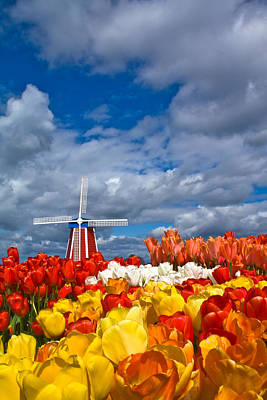 Windmill And Tulips Print by Patricia Davidson