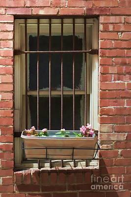 Window Dressing Print by Liane Wright