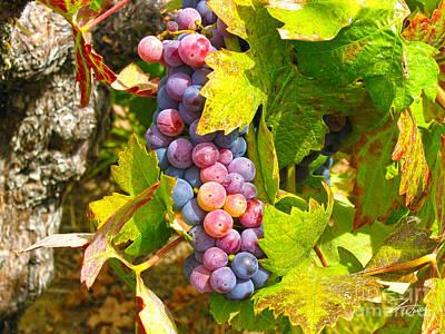 Vineyards Mixed Media - Wine Grapes II by Shari Warren