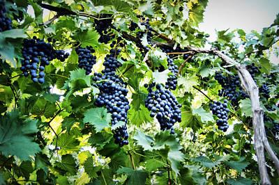 Wine On The Vine Print by Cricket Hackmann