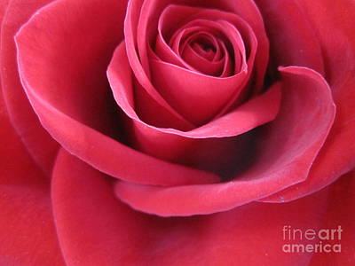 Luminous Drawing - Wine Rose 3 by Tara  Shalton