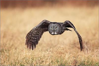 Wings Of Motion Print by Daniel Behm