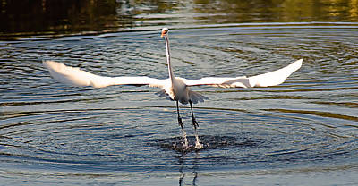 Water Photograph - Wingspan by Karl Ford