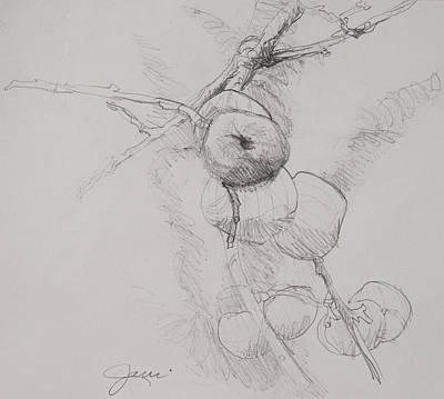 Winter Apples Sketch Print by Jani Freimann