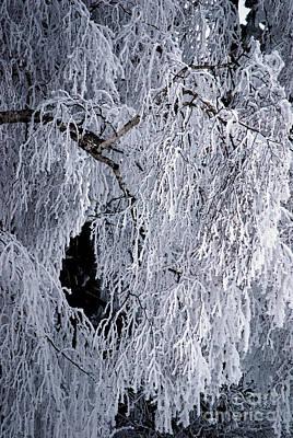 Winter Blanket Print by Sharon Elliott