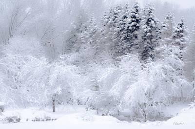 Winter Bliss Print by Pat Edsall