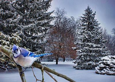 Bluejay Digital Art - Winter Blue Jay by Ron Grafe