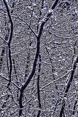 Density Photograph - Winter Branches by Garry Gay