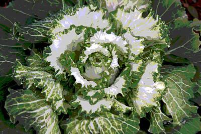 Cabbage Digital Art - Winter Cabbage Series II by Suzanne Gaff