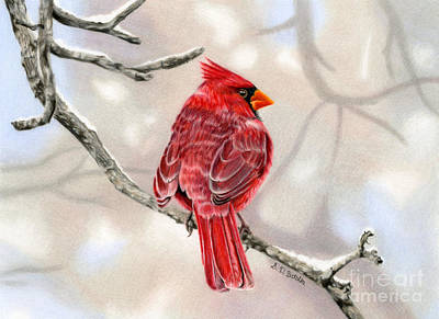 Cardinal Drawing - Winter Cardinal by Sarah Batalka