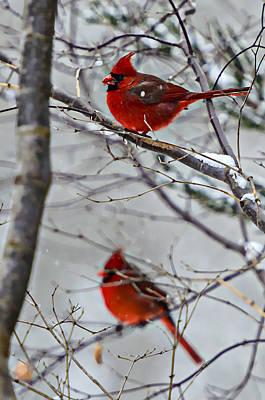 Winter Cardinals Print by Susan Leggett