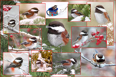 Snow Photograph - Winter Chickadees Collage by Peggy Collins